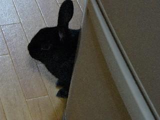 台所はね、立ち入り禁止なんだよ