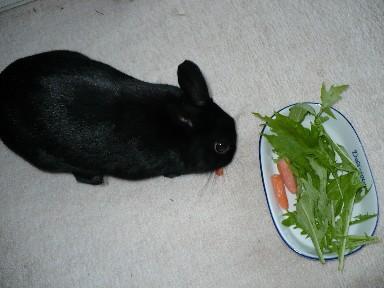 今日のサラダは、水菜とにんにん♪