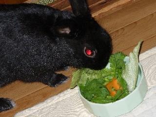 オリのサラダバー。今日はなんのお野菜かな~?