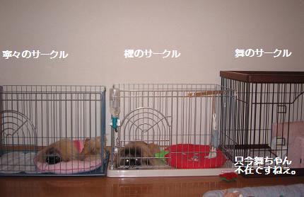 2007-11-18-a.jpg