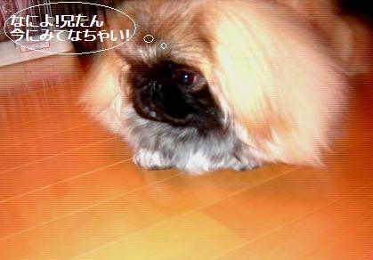 2007-12-14-nene3.jpg