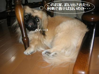20070914110321.jpg