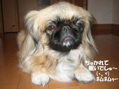 shanpu-2.jpg