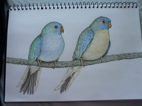 bird0805.jpg