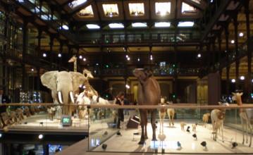 Grand-Galerie-de-LEvolution7.jpg