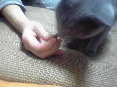 猫グリニーズ2