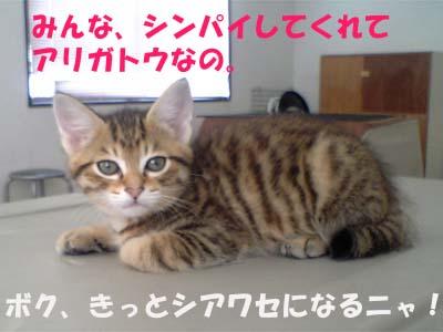 子猫アリガトウ