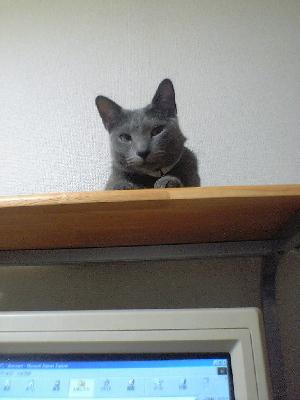 見下すネコ1