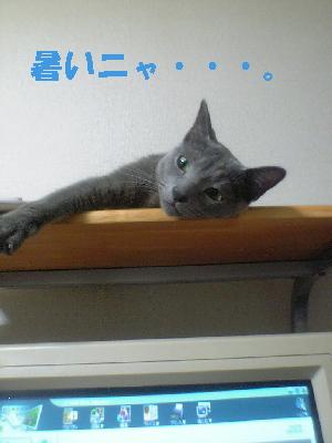 見下すネコ2