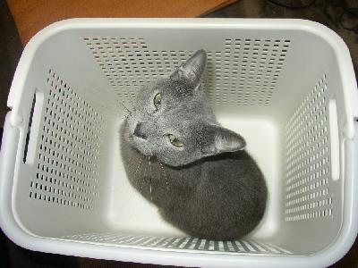 洗濯カゴ2
