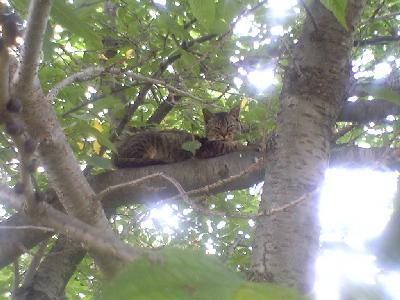 木の上のにゃんこ