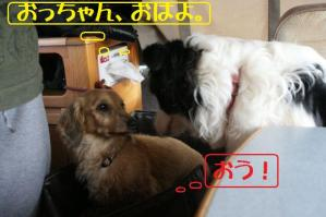 20110502_005mt.jpg