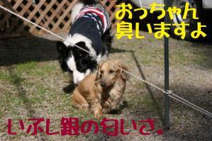 20110504_004mt.jpg