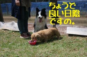 20110504_006mt.jpg