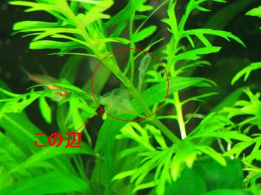 20070209002155.jpg