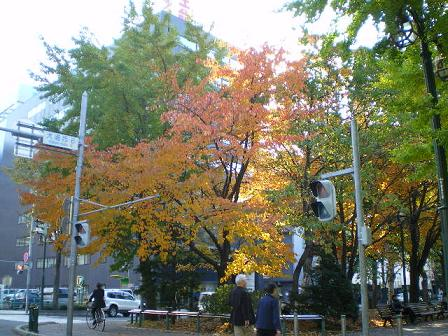 大通り公園 紅葉