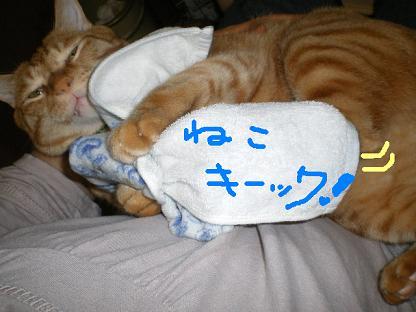 猫キ~ック