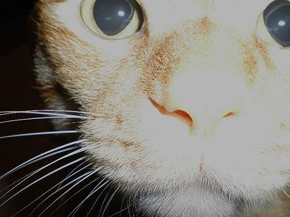 瞳の奥に・・・