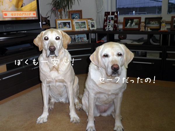 1_20120202172408.jpg