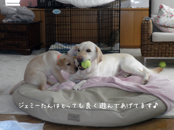 1_20120321185120.jpg