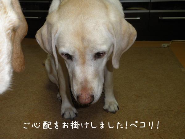 2_20120202172407.jpg