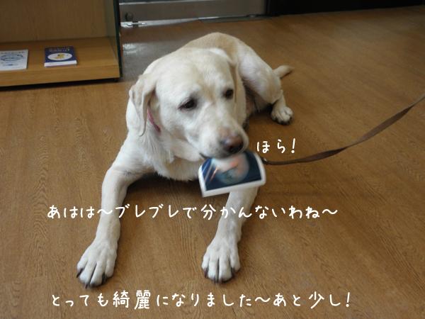 3_20120214140429.jpg