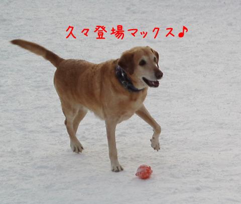 MAX_20111221203657.jpg