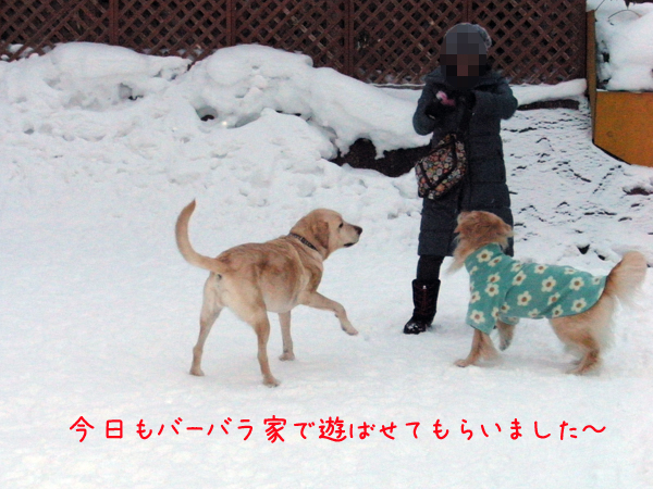 babara1_20120210215852.jpg