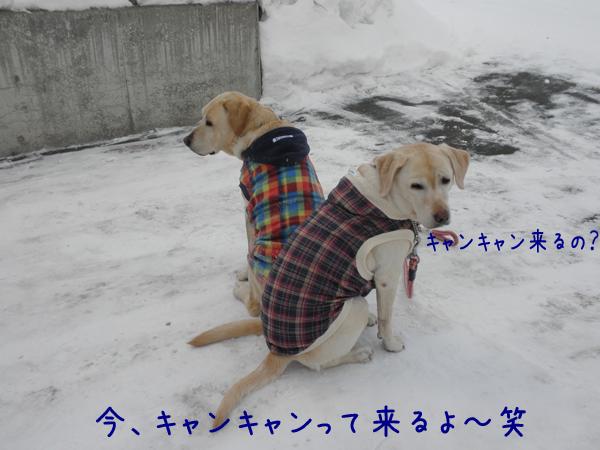 babara1_20120227212007.jpg