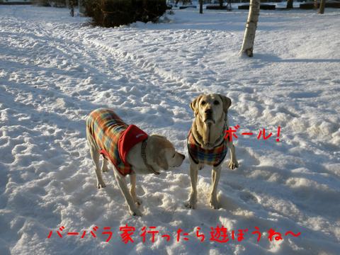 ball_20111208213549.jpg