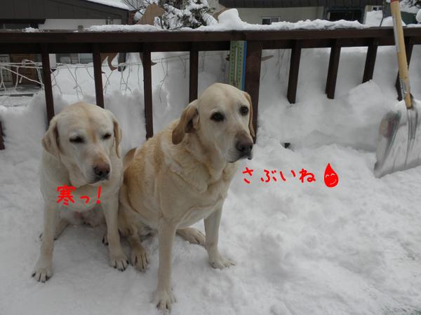 baru1_20120110213211.jpg
