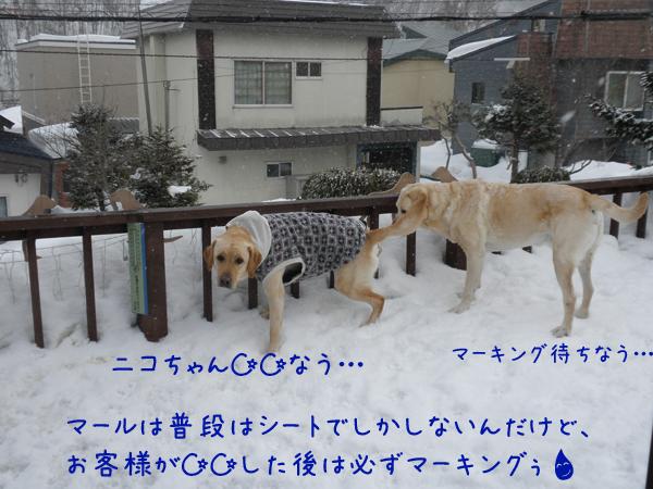 baru1_20120303204209.jpg