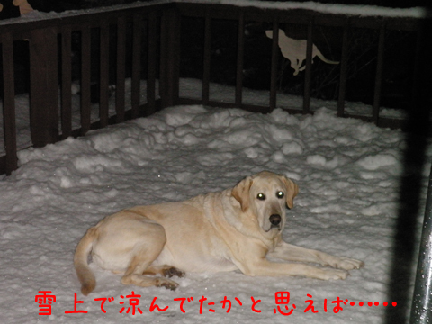 baru_20111214223504.jpg