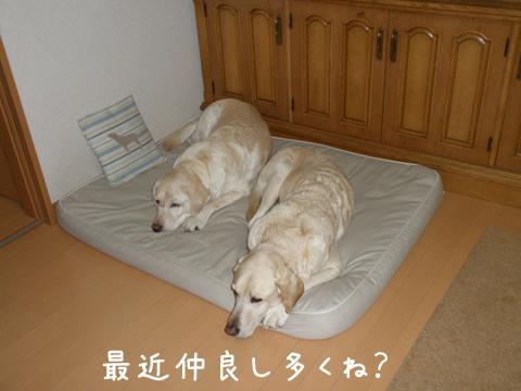 bed1_20111225212143.jpg