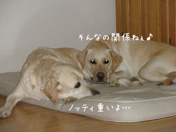 bed1_20120122000055.jpg