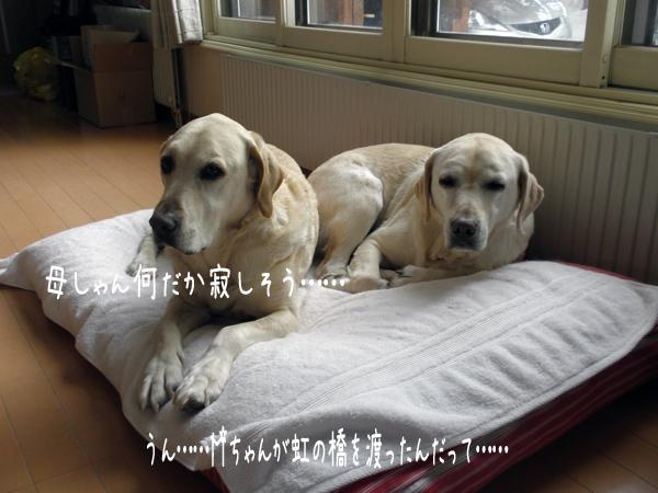 bed1_20120212184131.jpg