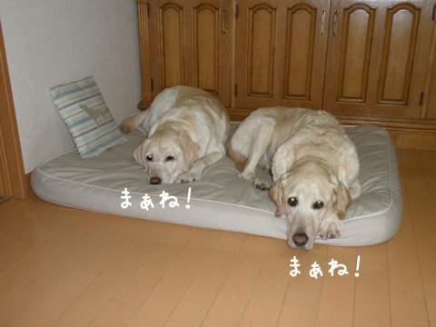 bed2_20111225212142.jpg