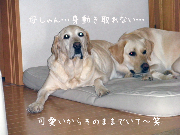 bed2_20120122000054.jpg