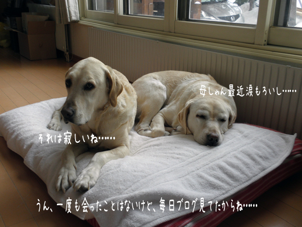 bed2_20120212184130.jpg