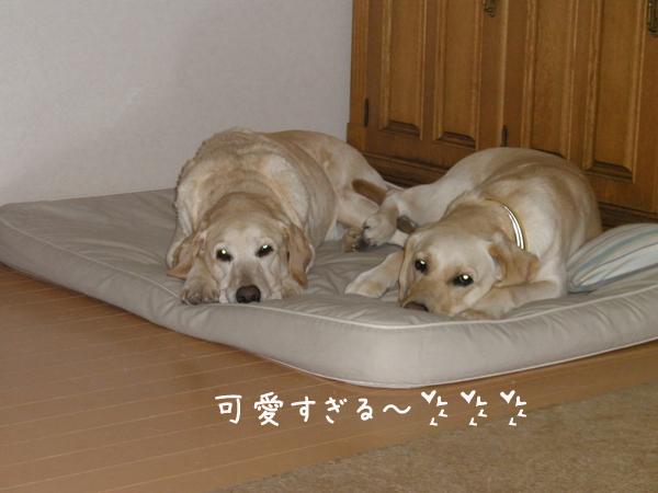 bed3_20120122000054.jpg