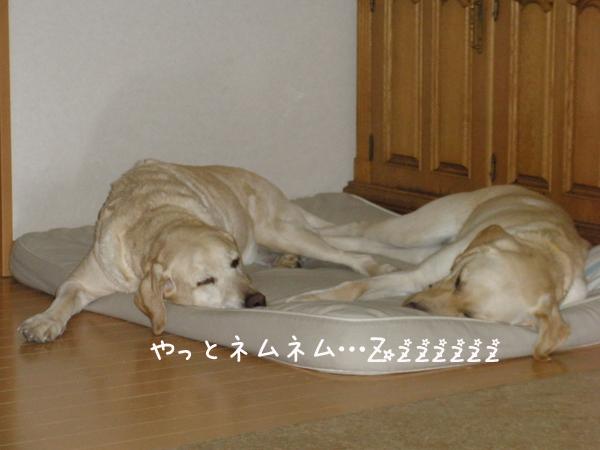 bed4_20120122000053.jpg