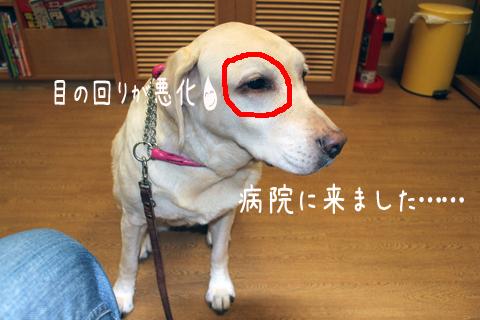 byouin_20111219224018.jpg