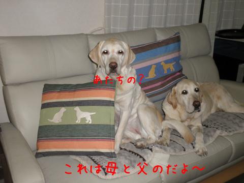 cover2_20111214223505.jpg