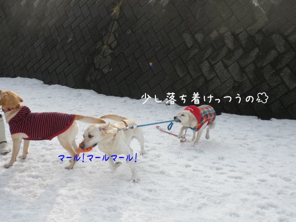 dai2_20120322212609.jpg