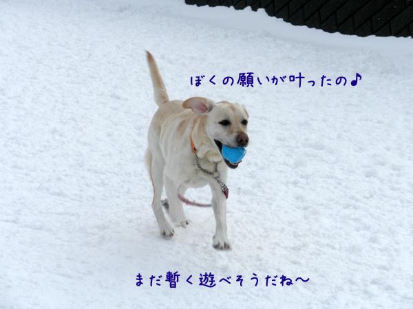 dai_20120320232958.jpg