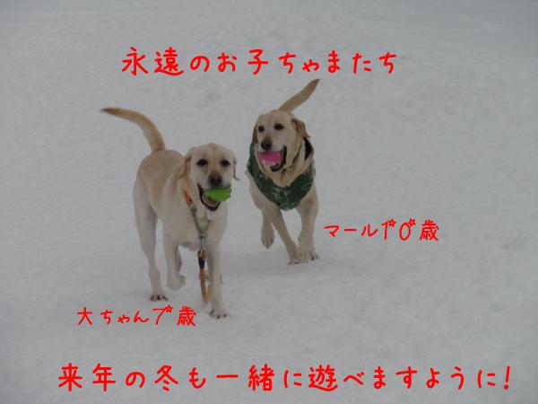 daimaru_20111231231036.jpg