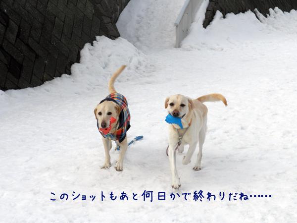 daimaru_20120314224236.jpg