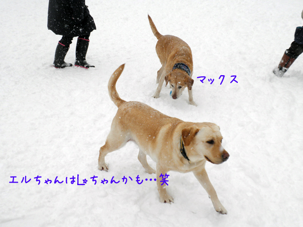 eru_20120219202321.jpg
