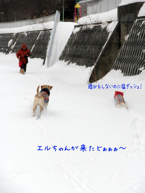 erukita_20120103203519.jpg