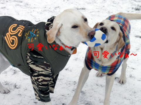 fadymaru2_20120104133633.jpg
